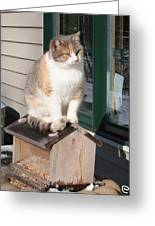 Catfeeder Greeting Card
