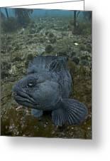 Catfish. Greeting Card