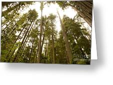 Cathedral Forest Greeting Card