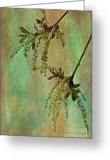 Catkins -- Tree-flowers Greeting Card