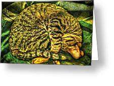 Catnappin' On A Cold Rainy Sunday Greeting Card