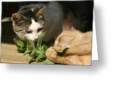 Catnip Anyone Greeting Card