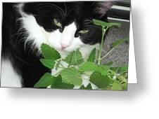 Catnip Greeting Card