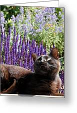 Cats 56 Greeting Card