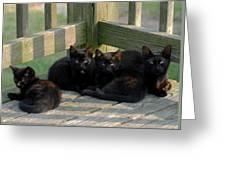 Cats 62 Greeting Card by Joyce StJames