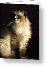 Cats 63 Greeting Card by Joyce StJames