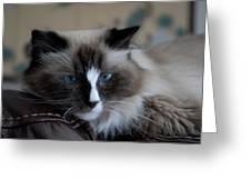 Cats 64 Greeting Card by Joyce StJames