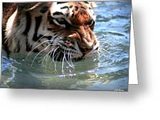 Cats And Water Greeting Card