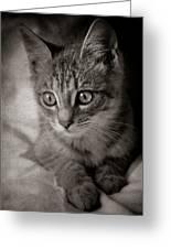 Cat's Eyes #05 Greeting Card