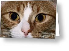 Cats Face Greeting Card