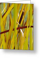 Cattail 1 Greeting Card