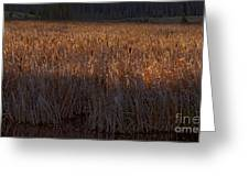 Cattail Bog   #3868 Greeting Card