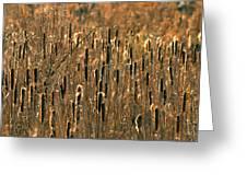 Cattail Marsh Greeting Card