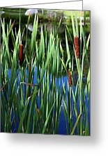 Cattail Pond In Pastel Greeting Card