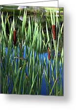 Cattail Pond In Watercolor Greeting Card
