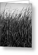 Cattail Reed Background Greeting Card