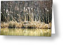 Cattail Reflections Greeting Card