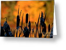 Cattail Silhouette Greeting Card