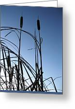 Cattails 5 Greeting Card