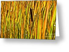 Cattails Aflame Greeting Card
