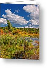 Cattails And Clouds Greeting Card