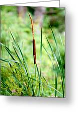 Cattails And Reeds Greeting Card