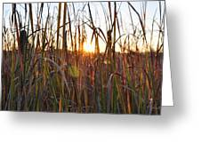 Cattails And Reeds - West Virginia Greeting Card