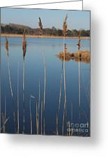 Cattails Cape May Point Nj Greeting Card