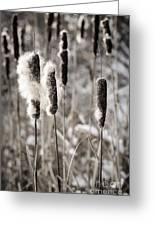 Cattails In Winter Greeting Card