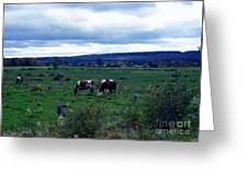 Cattle At Pasture Greeting Card