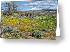 Cattle Camp Greeting Card