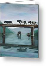 Cattle Crossing Greeting Card