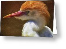 Cattle Egret 2 Greeting Card