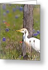 Cattle Egret At Fenceline Greeting Card