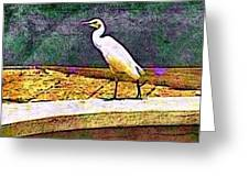 Cattle Egret In Town - Horizontal Greeting Card
