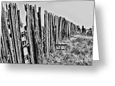 Cattle Fence By Diana Sainz Greeting Card