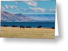 Cattle Grazing At Hawea Lake In Southern Alps In New Zealand Greeting Card