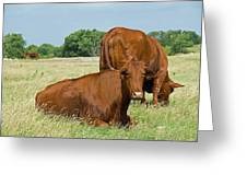 Cattle Grazing In Field Greeting Card