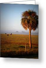 Cattle Grazing On Foggy Morning 1 Greeting Card