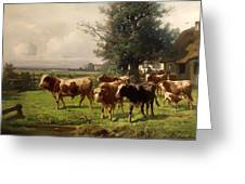 Cattle Heading To Pasture Greeting Card