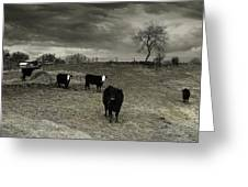 Cattle In The Winter Pasture Series Image 2 Greeting Card