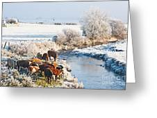 Cattle In Winter Greeting Card