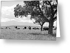 Cattle Ranch In Summer Greeting Card
