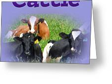 Cattle Greeting Card