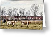 Cattle Train Greeting Card
