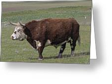Cattle With Horns Full Body Portrait Greeting Card