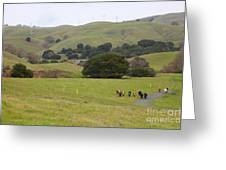 Cattles At Fernandez Ranch California - 5d21061 Greeting Card
