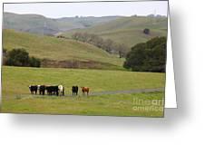 Cattles At Fernandez Ranch California - 5d21062 Greeting Card