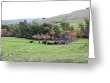 Cattles At Fernandez Ranch California - 5d21070 Greeting Card