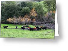 Cattles At Fernandez Ranch California - 5d21071 Greeting Card by Wingsdomain Art and Photography